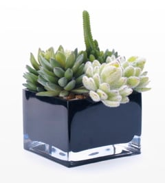 Modern Succulents in Las Vegas  Convention flowers Las Vegas Convention Decor Las Vegas