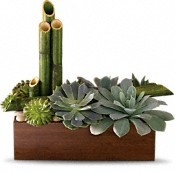 Modern mix succulents
