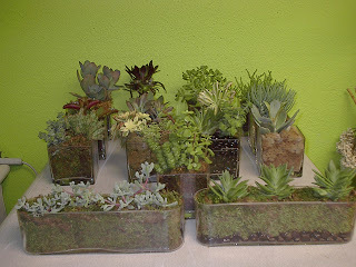 Succulent displays