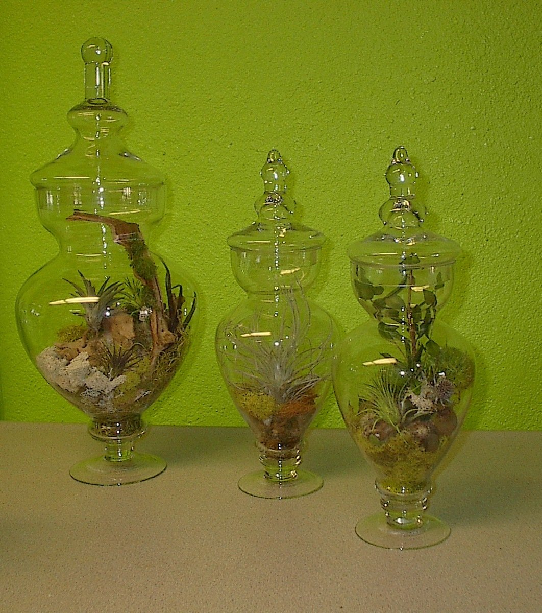 Terrariums for convention booth in Las Vegas, Plants for conventions