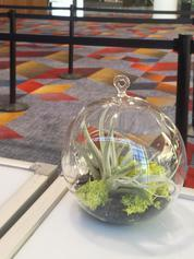 Airplant displays at Las Vegas Convention